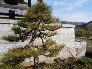 IMG_20180307_宗泉寺二友