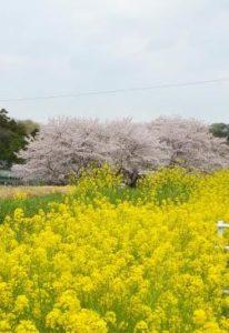 令和2年4月9日(木)二色の春