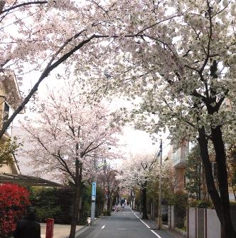 令和3年3月25日(木)満開の桜